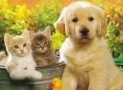 FREE SAMPLE PET FOOD FOR YOUR ANIMAL!